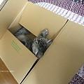 Photos: どっか行っちゃったな~と思ったら箱で寝てたり。