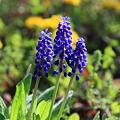 Photos: 野に咲く