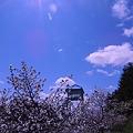 宮ノ台(千島桜)