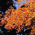 写真: 滋賀県 石山寺 紅葉