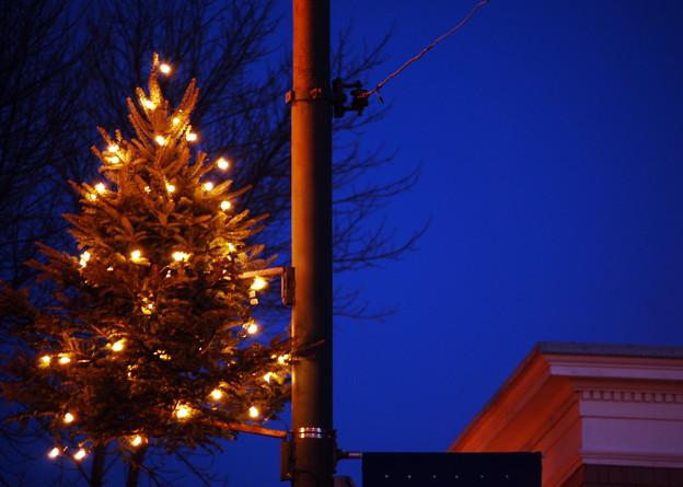 写真: Christmas in Maine St. 12-12-09