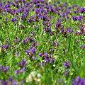 Oh My Lawn! 6-16-09