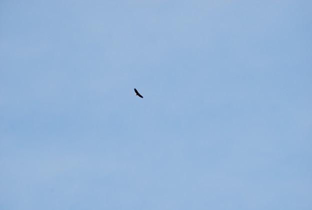 Bald Eagle 2-6-10