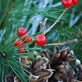 Photos: Seasons Greetings
