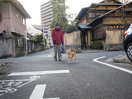 100123おじいちゃんと犬お散歩中