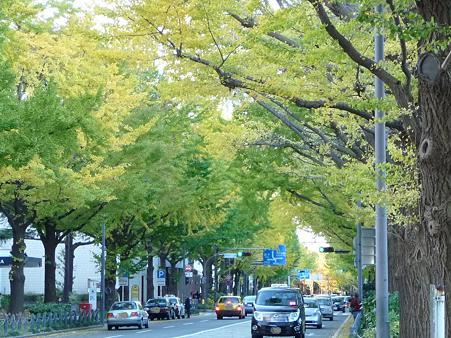091118-山下公園通 (20)