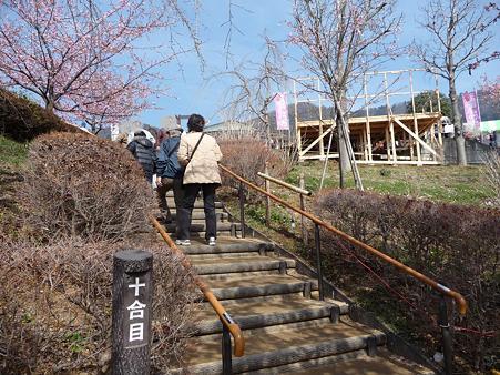 100223-松田山 河津桜 (69)
