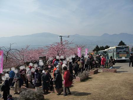 100223-松田山 河津桜 (78)