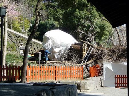100311-八幡さま (42)
