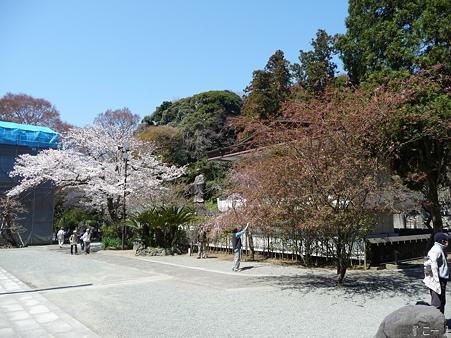 110406-妙本寺 (23)