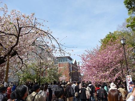 110417-造幣局 桜の通り抜け (79)