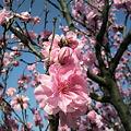 写真: 桜1