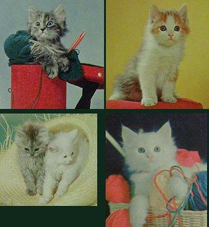 cat's,kitten,postocard拡大