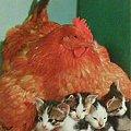 写真: cat's,kitten,postocard拡大