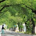 写真: 深緑の桜並木01-12.07.06