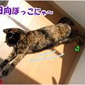 Photos: のび~