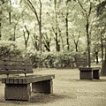 Photos: あがたの森公園 EOS7D EF50 F1.4