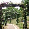 Photos: バラのアーチを~♪