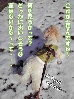 雪の中でくーかい1