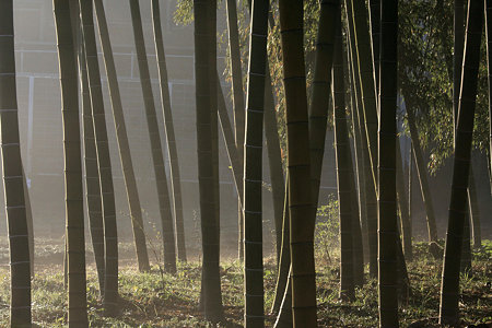 2009.12.06 和泉川 竹林