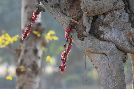 2010.02.01 カジュラーホー ラクシュマナ寺院 献花