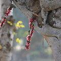 Photos: 2010.02.01 カジュラーホー ラクシュマナ寺院 献花