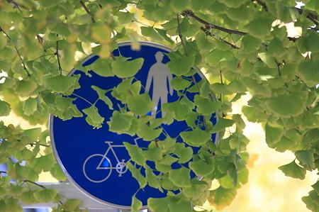 2010.12.01 大池公園への道 銀杏の歩道