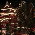 写真: 松本城と菊の花