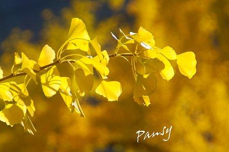 yellow~♪