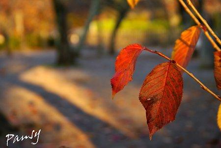 晩秋の午後・・