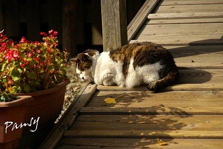 観音様が見守る陽だまり・・弘明寺の猫さん・・