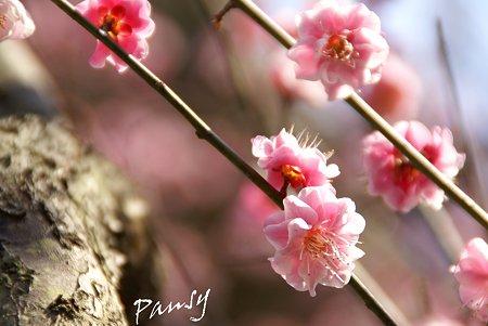 夢いろピンク・・3