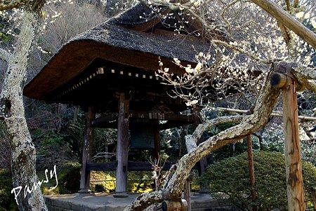早春の東慶寺にて・・14