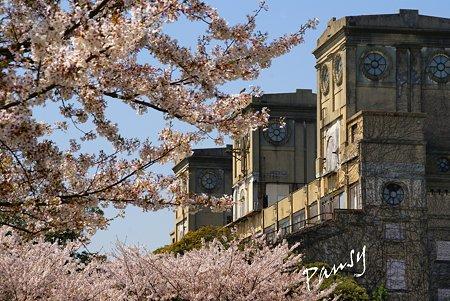 桜景色・・9