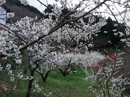 2010年2月28日美郷重楽寺07