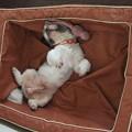 Photos: 寝姿も大胆です♪