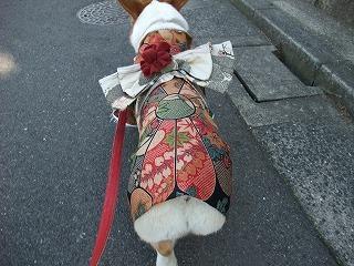 2010_0104晴れ着で初詣0048