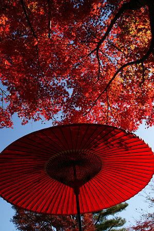 番傘と紅いモミジ!(091115)