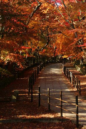 紅葉の参道を歩く!(091130)