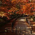 Photos: 紅葉の参道を歩く!(091130)