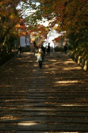 紅葉の散る石段!(091130)