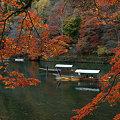 写真: 紅葉と川下りの船!(091130)
