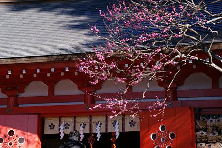 紅梅彩る、荏柄天神社!(100124)