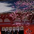 Photos: 紅梅彩る、荏柄天神社!(100124)