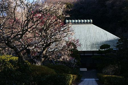 紅白梅浄妙寺100206-113