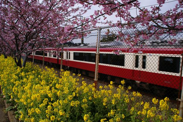 Photos: 桜の中を走る、京急電鉄!(100214)