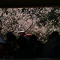 Photos: 額縁の梅風景!(100314)