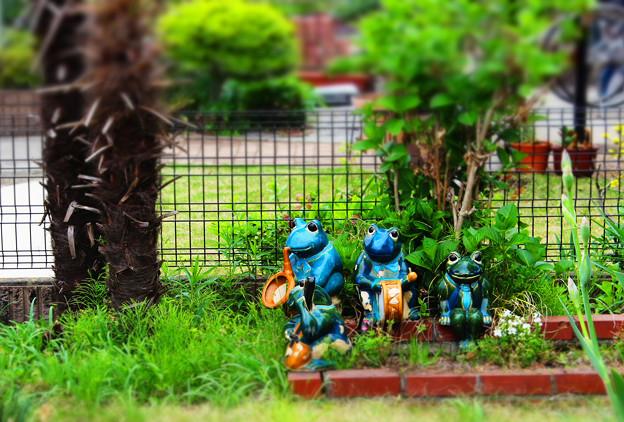 カエルさんのお庭♪