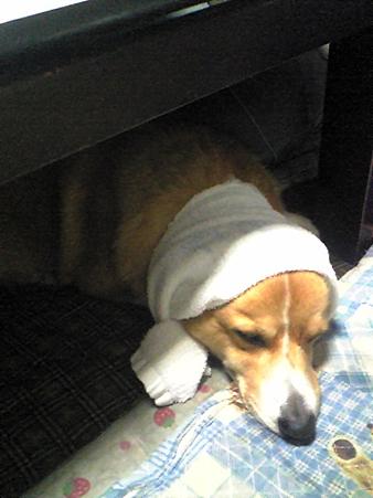 土方のおっさんが寝ています