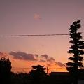 Photos: あの樹 何の樹